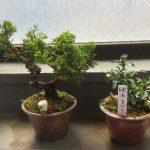 盆栽町のワークショップで教えてもらった、超簡単な盆栽の作り方。